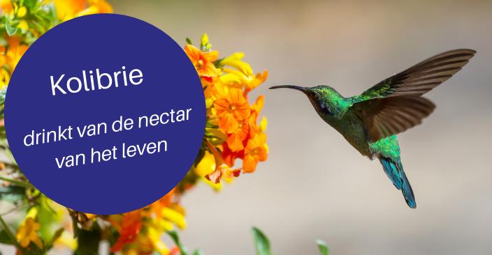 Geluk & Kolibrie